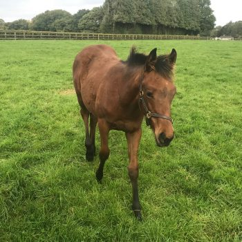 Sixties Icon Ex Hi Note Filly