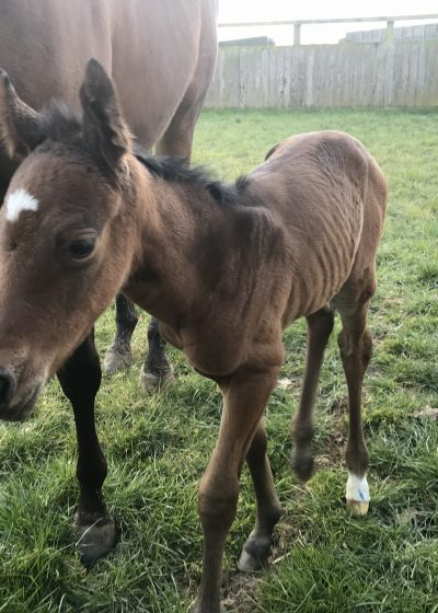 Sixties Icon ex Zaatar Filly