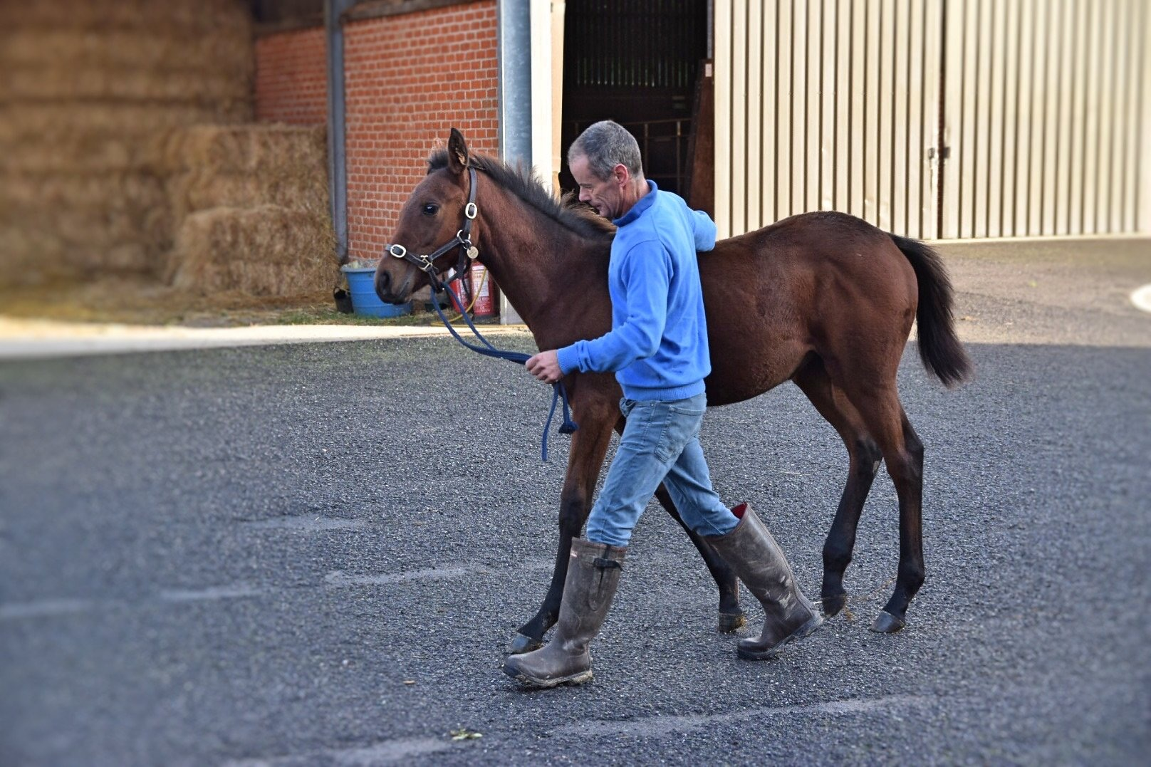 Heerat Ex Pacches Filly