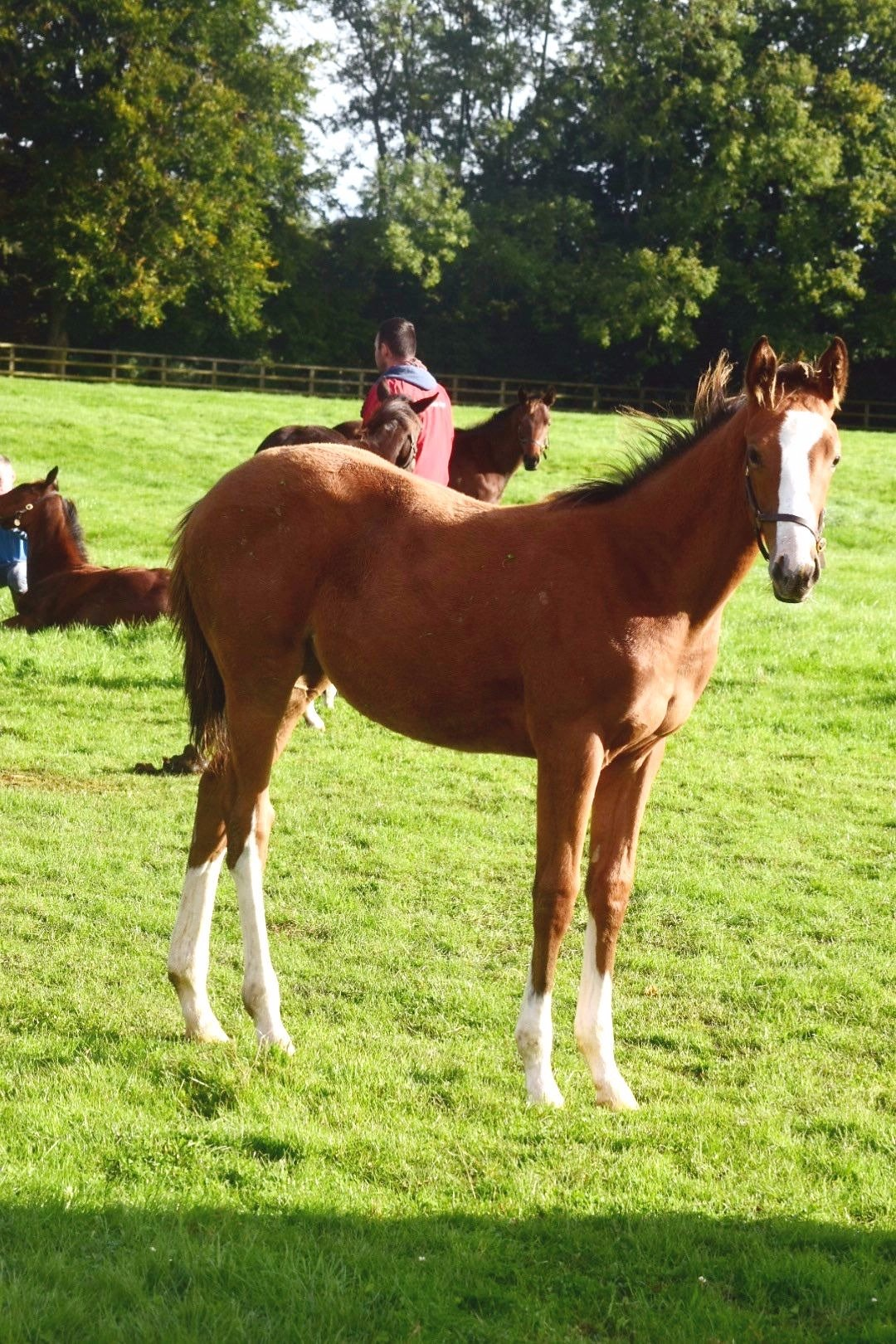 Sixties Icon Ex Tanojin Filly
