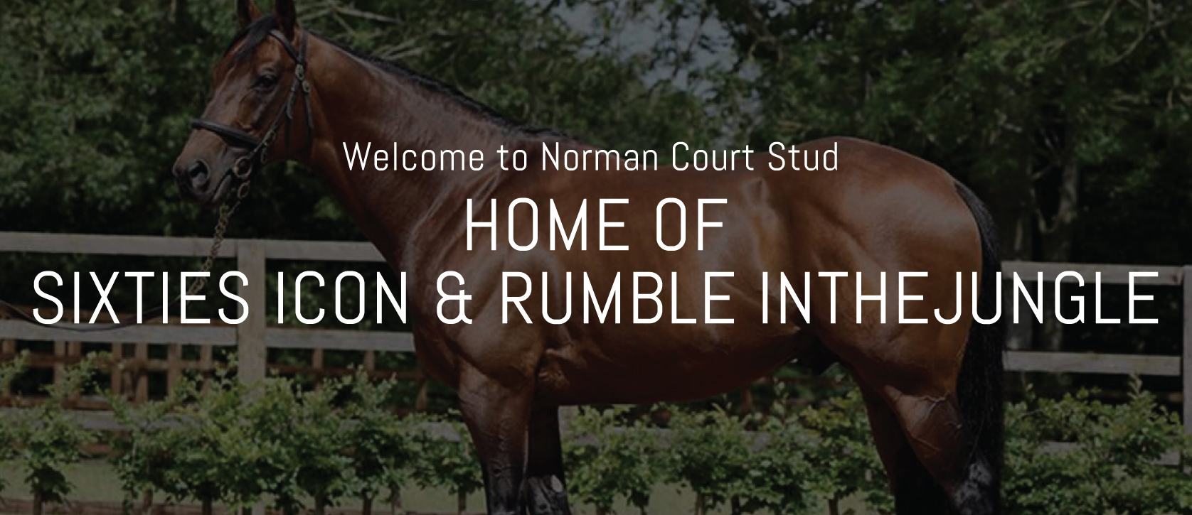Welcome to Norman Court Stud
